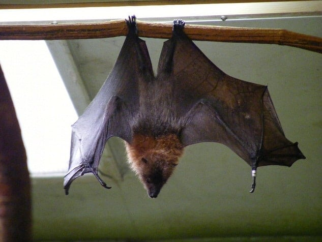 Bat Animal Totem Symbolism & Meanings | SunSigns Org