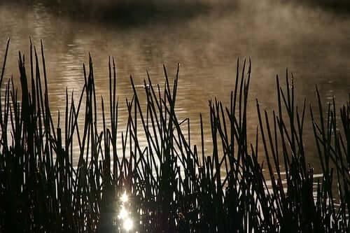 celtic reed tree