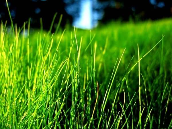 People born under the Grass Mayan astrology sign are very sensitive people.