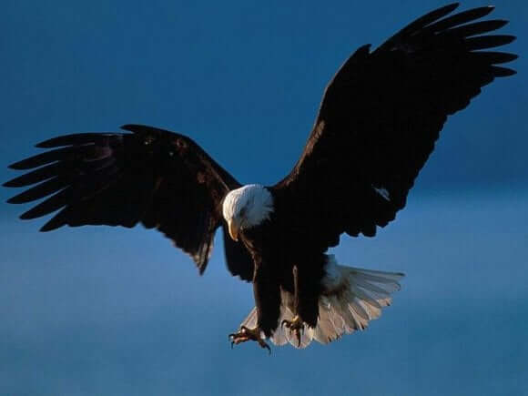 The Eagle is the fifteenth Mayan day sign and considered one of the most powerful day signs.