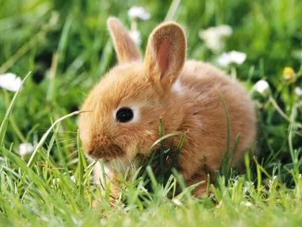 Maya zodiac sign Rabbit people are playful and carefree.