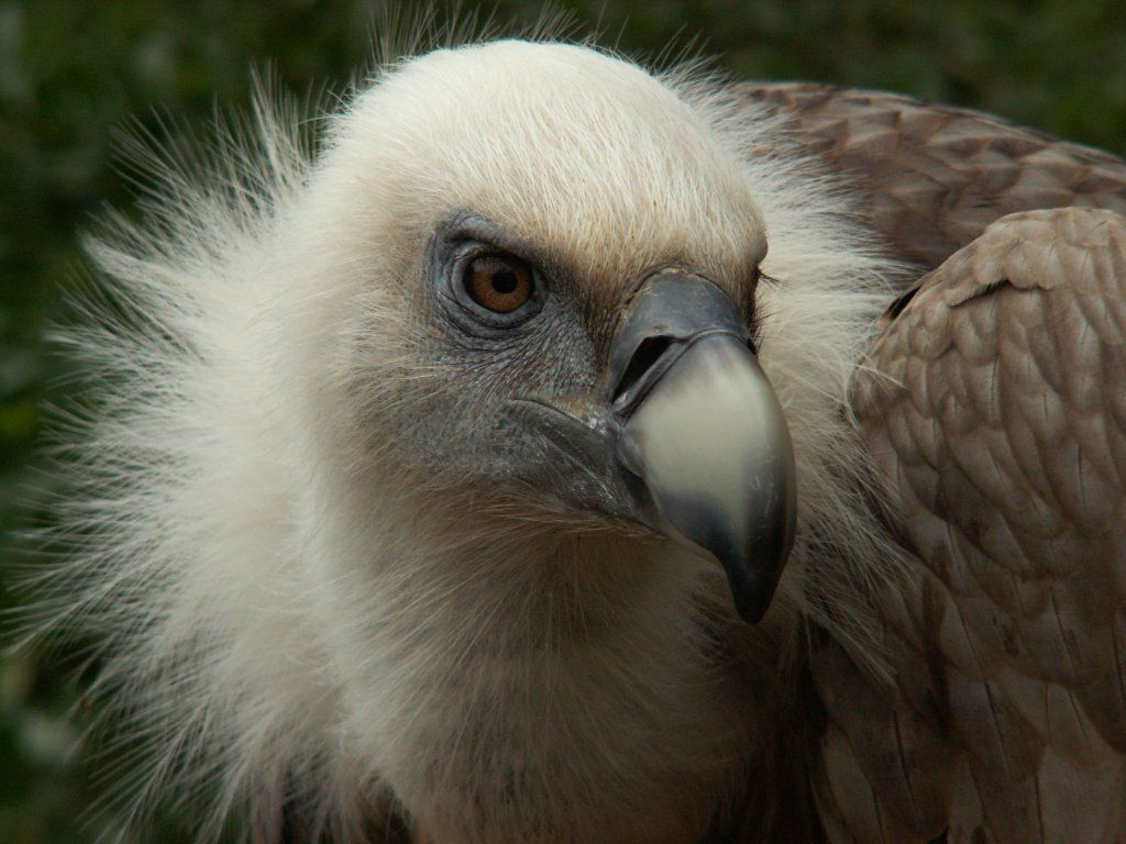 The Mayan day sign of vulture is symbolic of beginner's luck