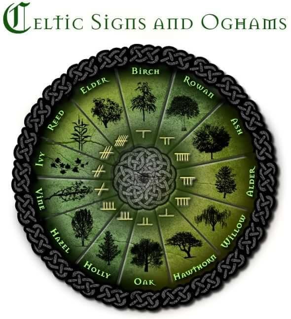celtic astrology elder