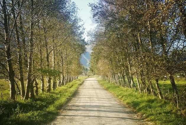 life-path