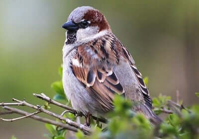 Sparrow Animal Totem Symbolism & Meanings | SunSigns Org