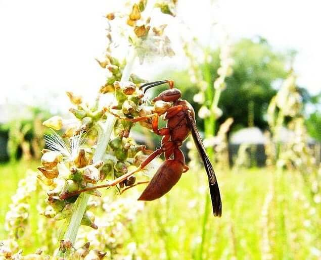 Wasp Spirit Animal