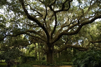 June Symboli... Oak Tree Symbolism Marriage