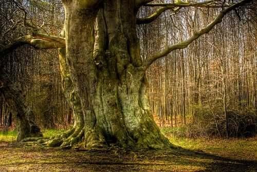 Tree Symbolism Sunsigns