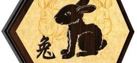 Rabbit 2019
