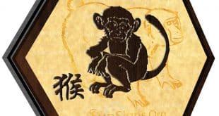 monkey 2020