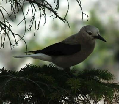 dream-bird