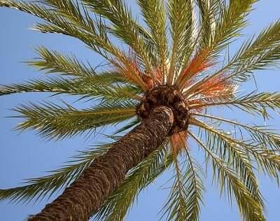 Palm Tree Symbolism Sun Signs