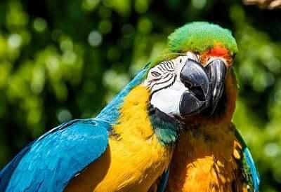 birds-totem