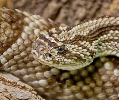 reptile-totem