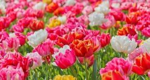 flowers-symbolism