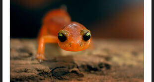 newt spirit animal