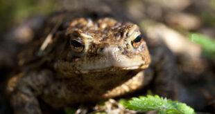 toad spirit animal