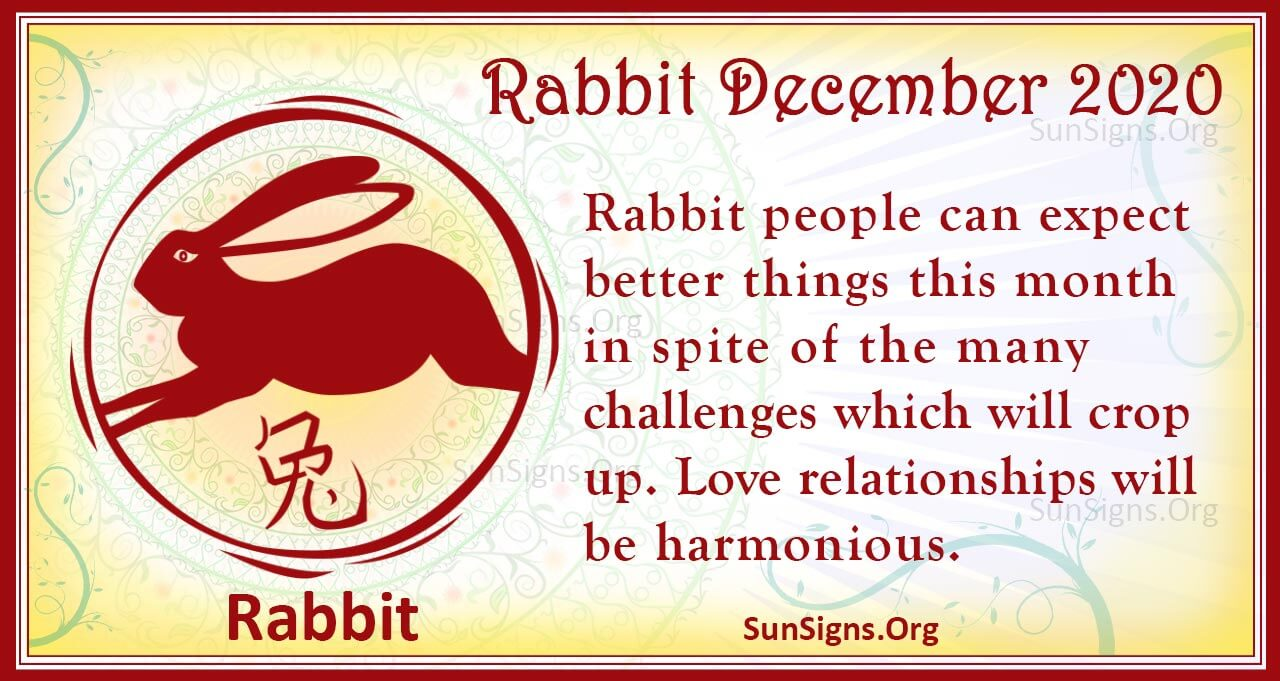 rabbit december 2020
