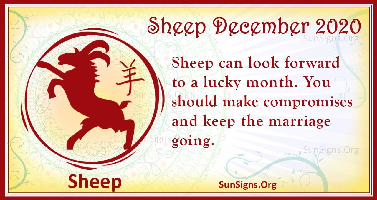 sheep december 2020