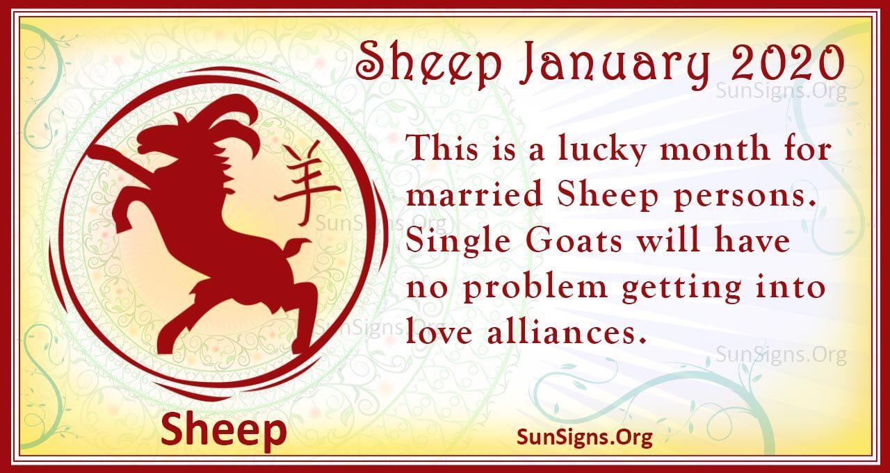 sheep january 2020