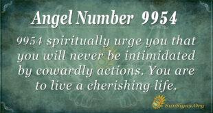 9954 angel number