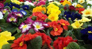 flower colors symbolism