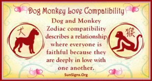 dog monkey compatibility