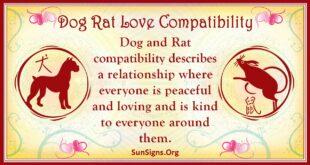 dog rat compatibility
