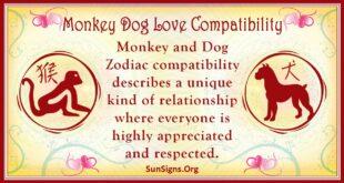 monkey dog compatibility