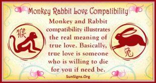 monkey rabbit compatibility