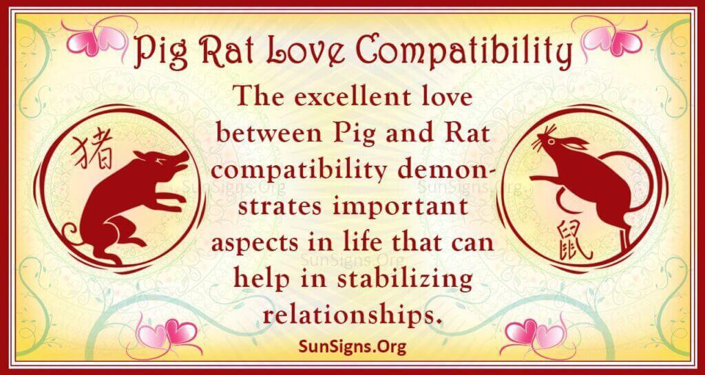 pig rat compatibility