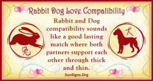 rabbit dog compatibility