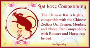 rat love compatibility