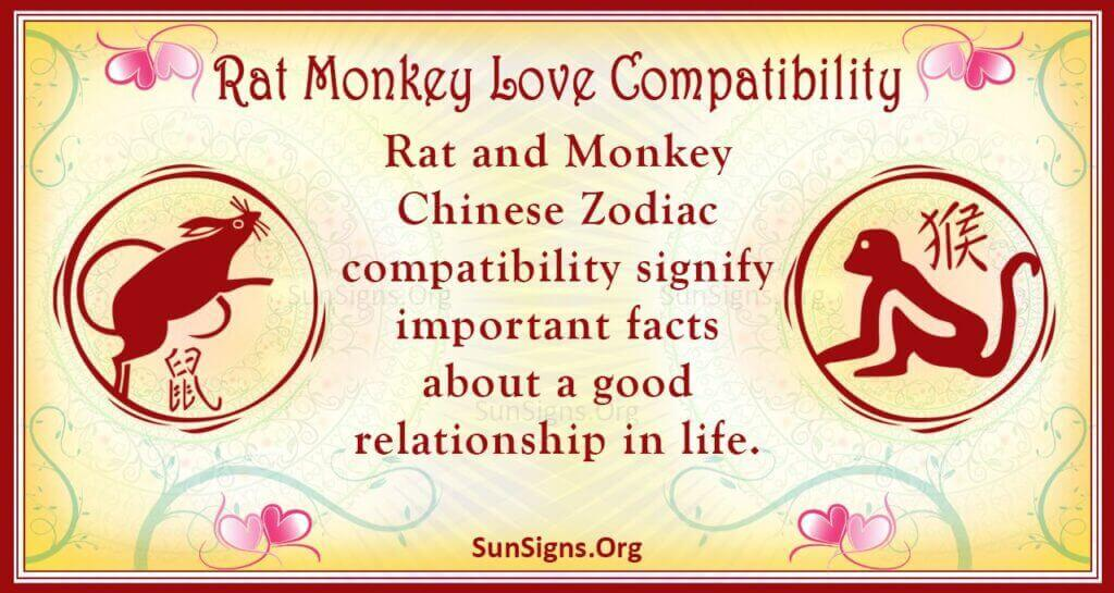 rat monkey compatibility