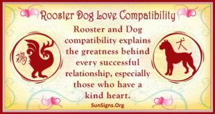 rooster dog compatibility