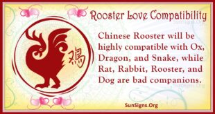 rooster love compatibility
