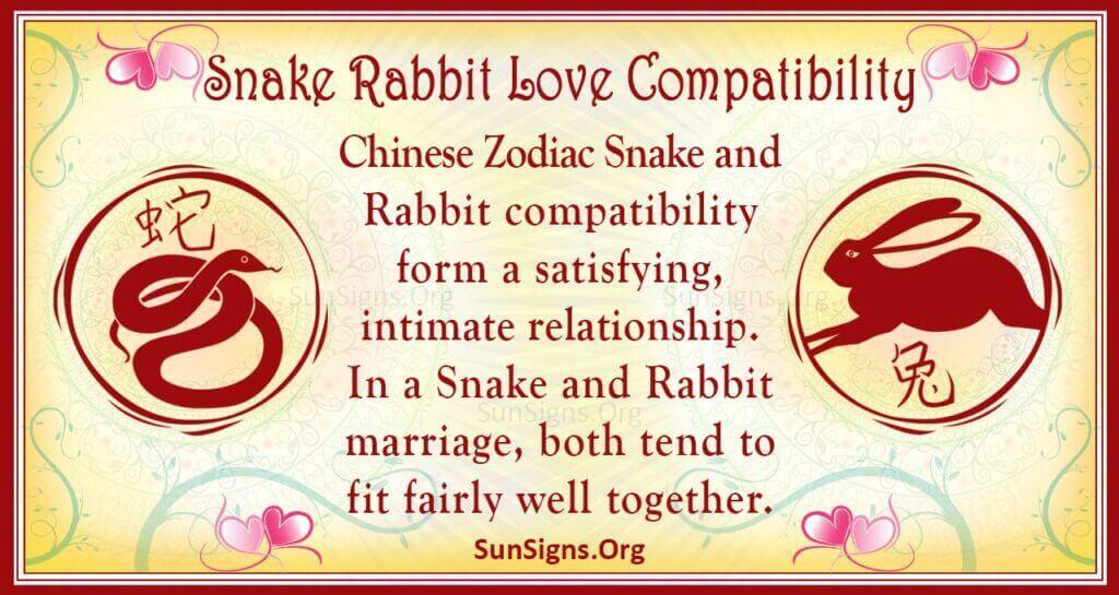 snake rabbit compatibility