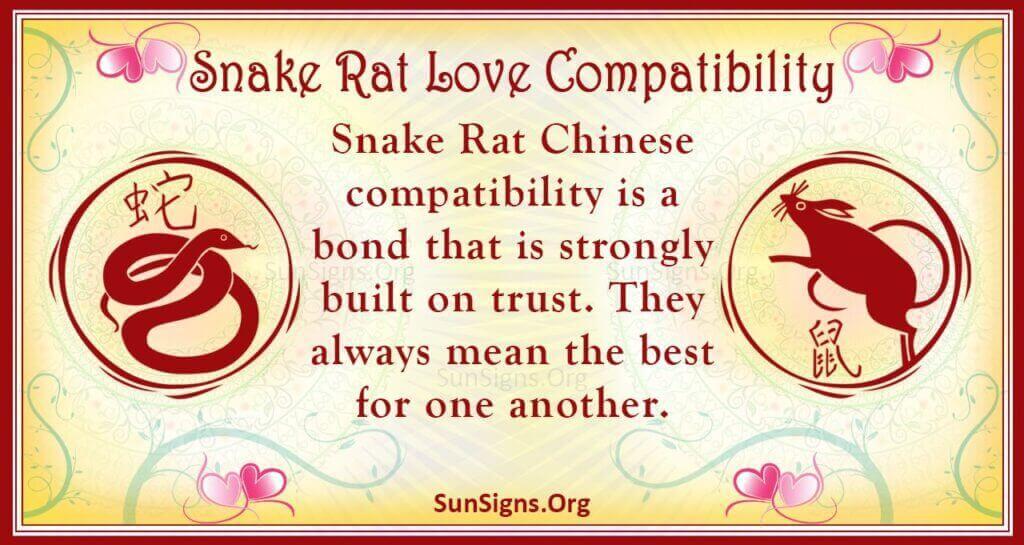 snake rat compatibility